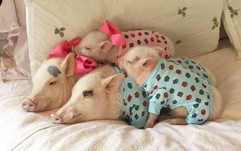photos of pets in pajamas