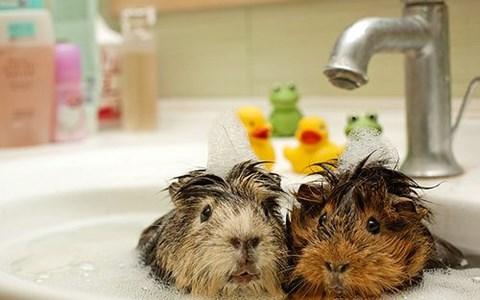 photos of adorable wet animals