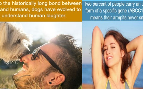 Strange WTF facts to keep your brain entertained this evening.