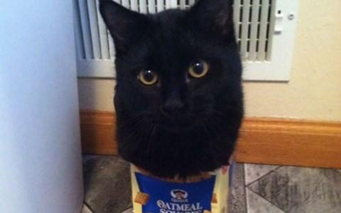 lolcats Memes Cats funny animals - 3448581