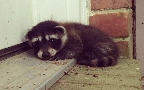 Animals who came to visit people unexpectedly