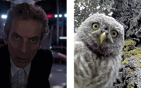 Peter Capaldi gifs owls 12th Doctor - 8425958400
