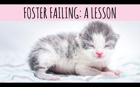 Video about fostering a kitten and the responsibility that it entails