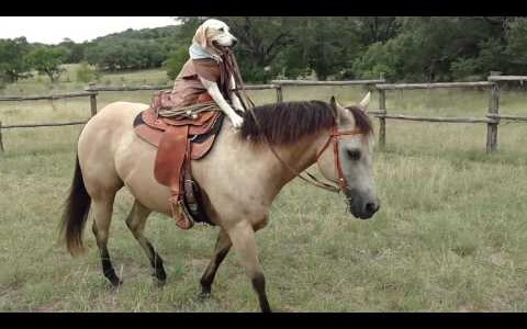 Cute video of a dog riding a horse like a pro