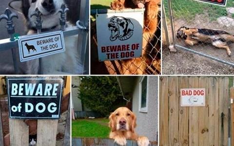 perros con letreros de cuidado con el perro