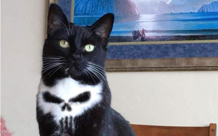 a cat with a skull on its fur